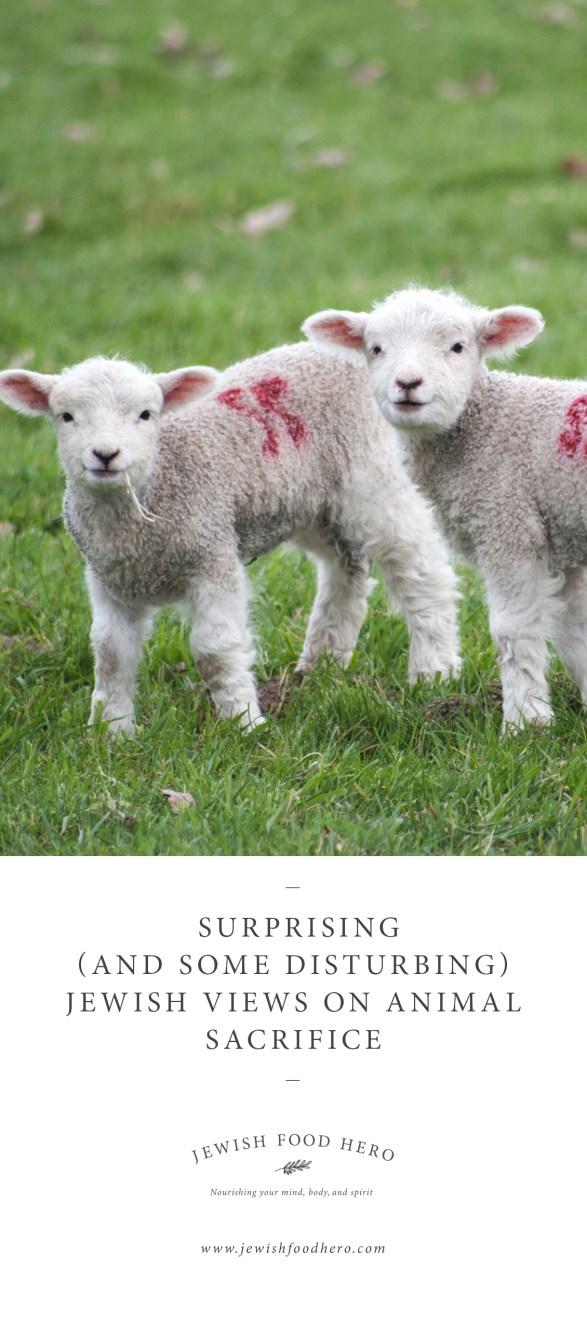 Surprising (and Some Disturbing) Jewish Views on Animal Sacrifice-2-Jewish Food Hero