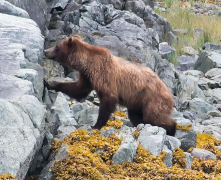 Animals of Alaska