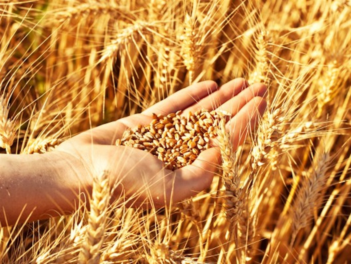 From barley to holiness in 49 days  Jewish Journal