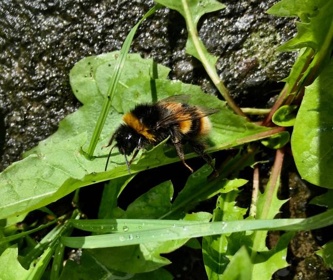 Soggy bee by Jez Braithwaite