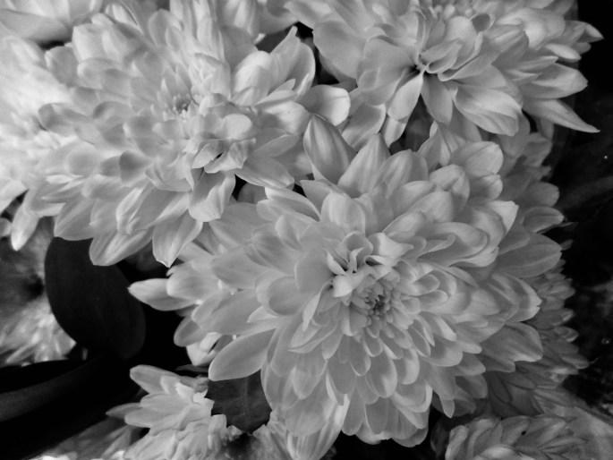 Monochrome Dahlia by Jez Braithwaite