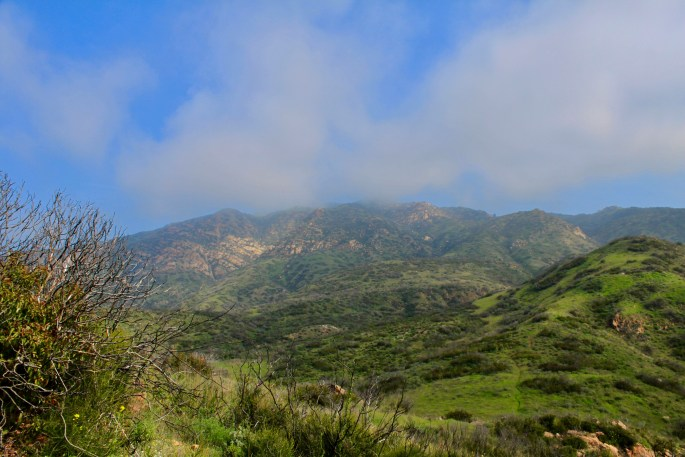 Serra Hills, Malibu by Jez Braithwaite