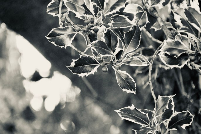 Holly leafs and berries in silvertone by Jez Braithwaite