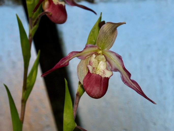 Orchid by Jez Braithwaite