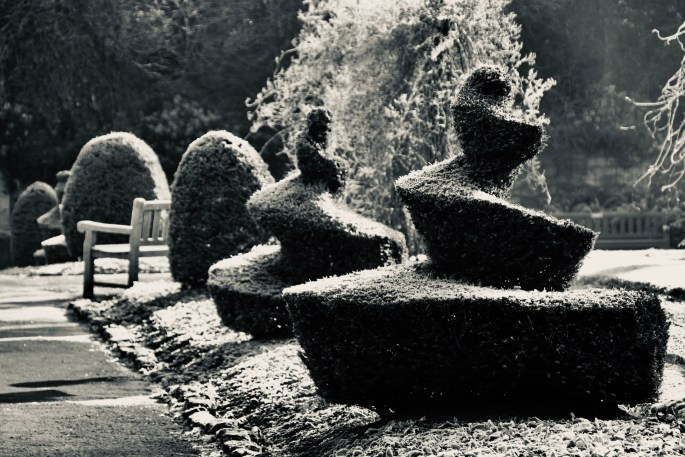 Spiral Topiaries by Jez Braithwaite