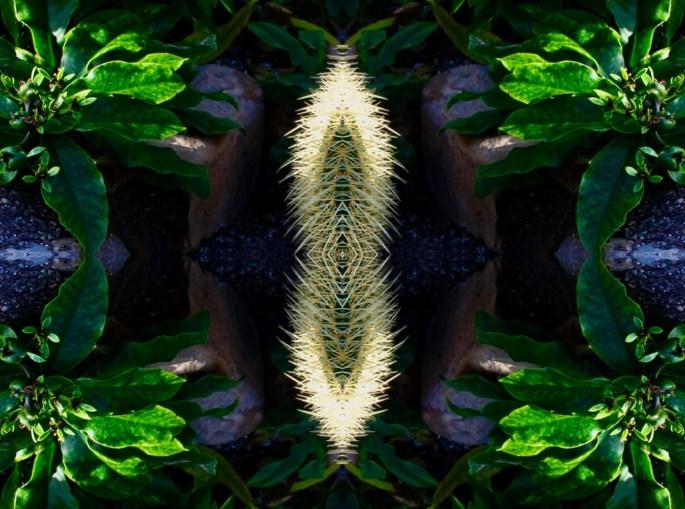 Cactus - Quad symmetry