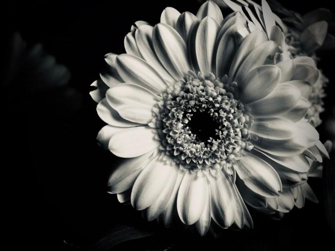 Daisy in silvertone