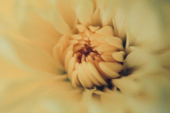 Yellow mum with dramatic cool filter