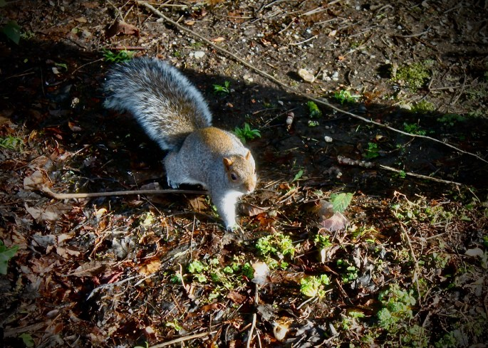 Squirrel on the hunt