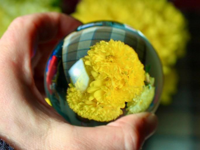 Lensball carnation