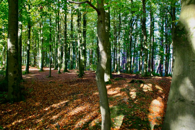 Pollock Country Park