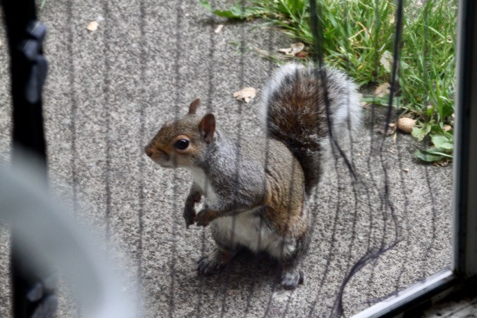 """""""Excuse me, I've been sent to ask for some more nuts"""""""