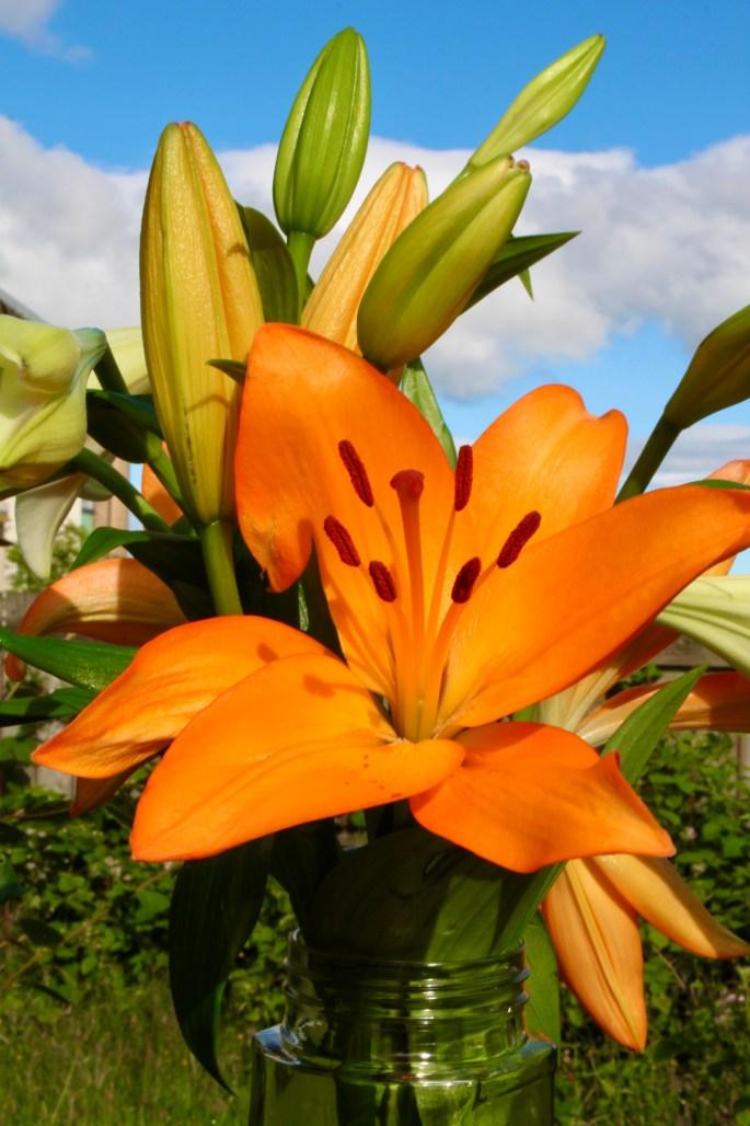 Longi lily