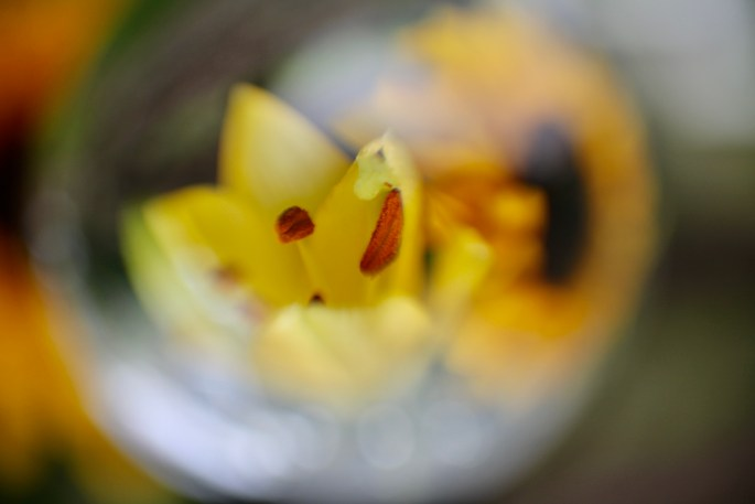 Lily in a lensball