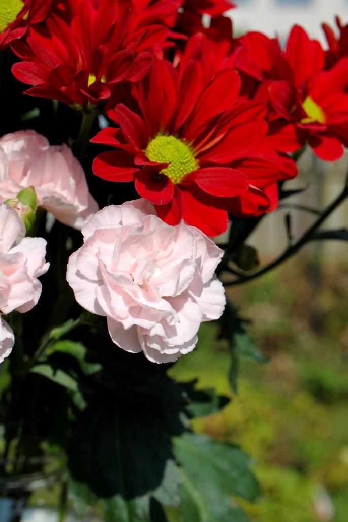 Carnations & chrysanths