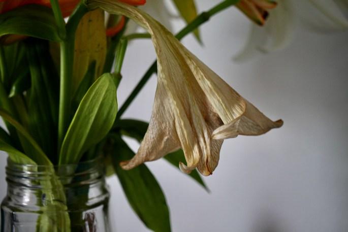 LA Lily