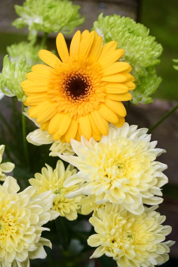 Chrysanths & a gerbera daisy