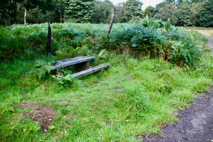 Overgrown picnic bench