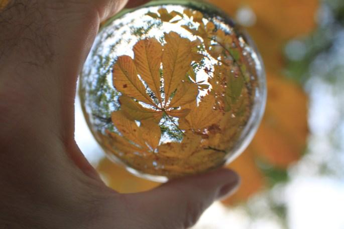 Horsechestnut leafs