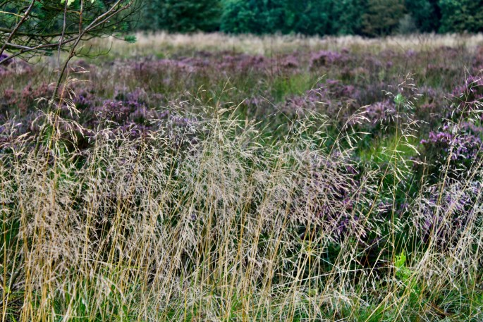 Dried grass & heather