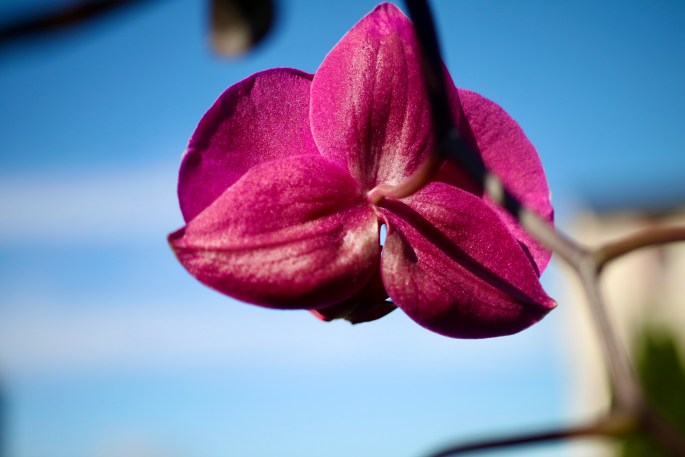 Orchid back