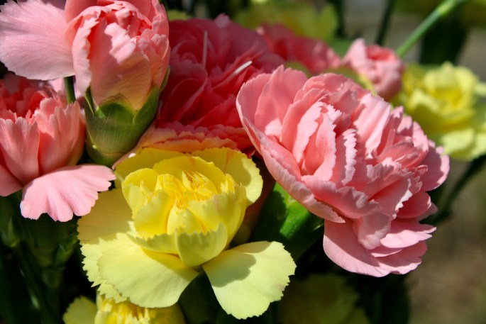 Pink & yellow carnations