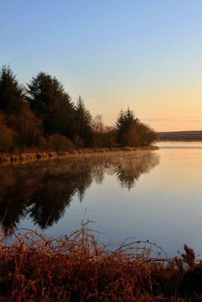Tree reflections in Fannyside Lochs