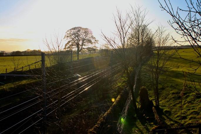Tracks shining in the morning sun
