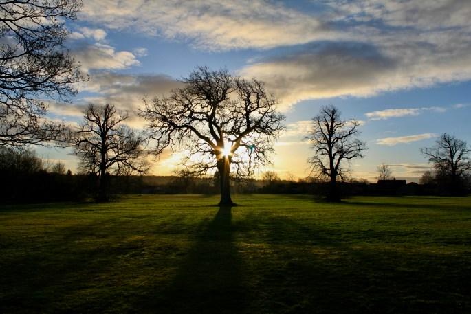 Sun bursting through a tree