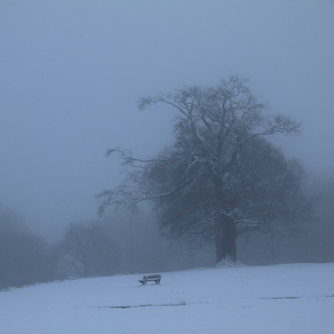 Tree & bench in the mist