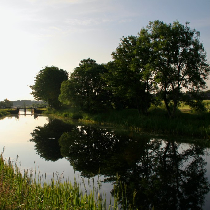 Trees by the Forth & Clyde Canal