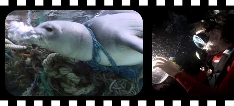 Documentaire environnement Netflix : A plastic ocean