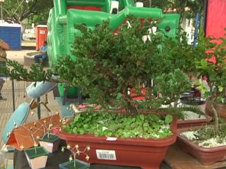1. Símbolo da cultura oriental, bonsais estavam a venda no festival.