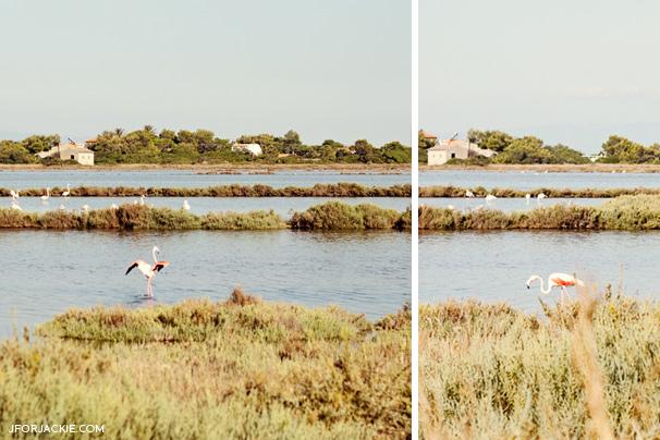 Flamingo - Carloforte, Island of San Pietro