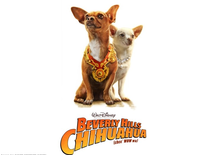 /home/tribu/public html/wp content/uploads/sites/14/2016/01/Beverly Hills Chihuahua