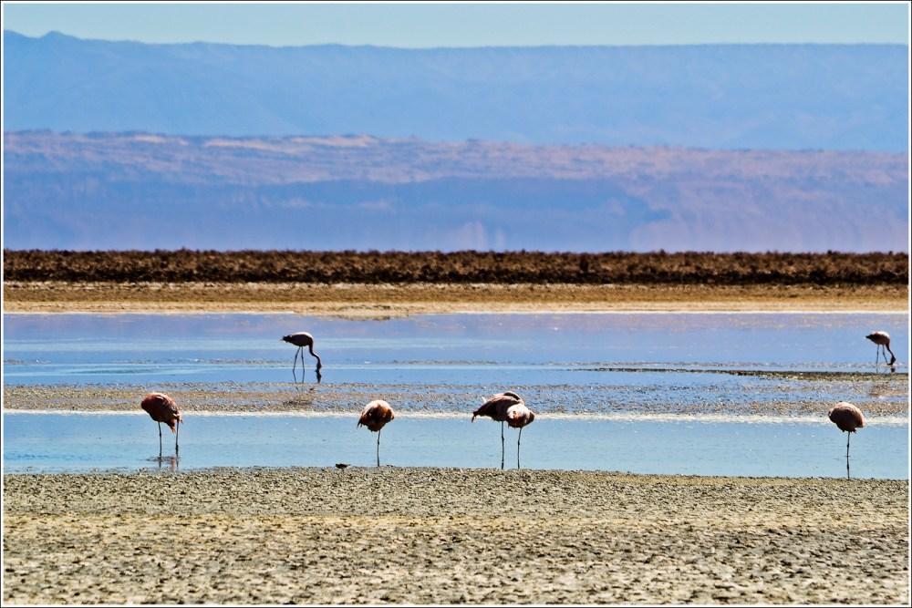[Fotografía] Laguna Chaxa - Salar de Atacama (1/6)