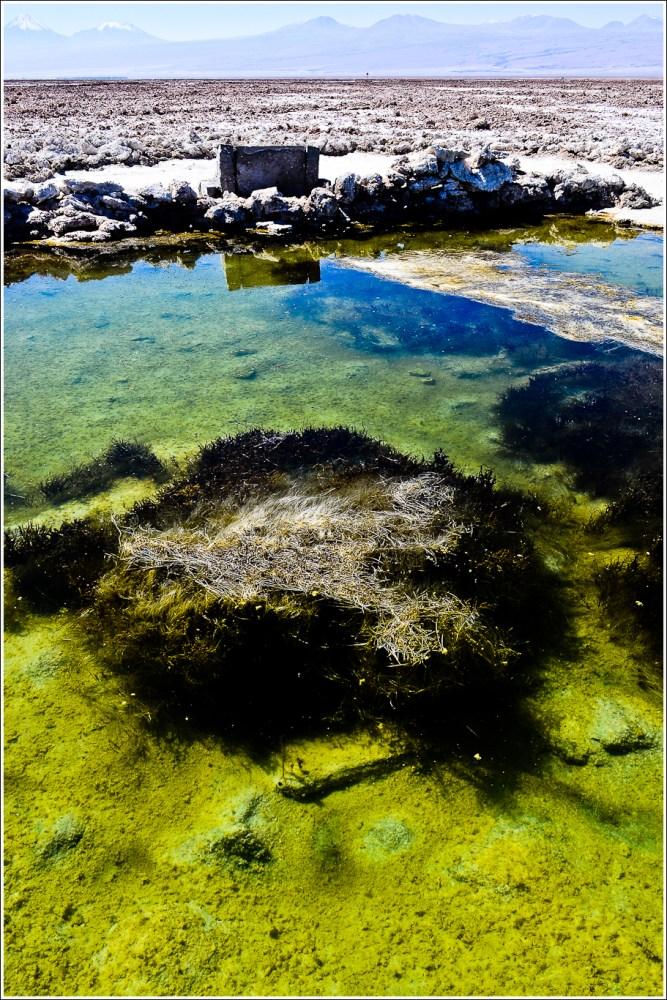 [Fotografía] Laguna Chaxa - Salar de Atacama (3/6)