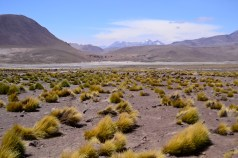 Altiplano Norte Chile