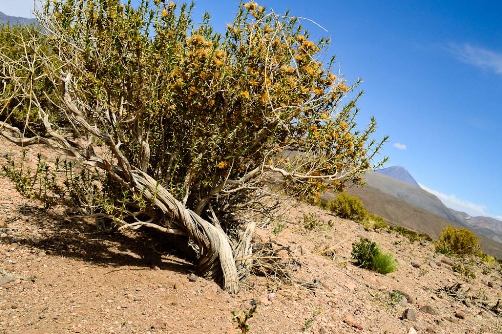 [Fotografía] - Machuca y alrededores, norte de Chile (3/6)