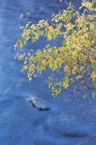 Fall Colors Over Eastern Sierra Creek - Lee Vining California