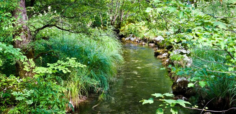 Quiet stream - Konigsee - Bavaria Germany