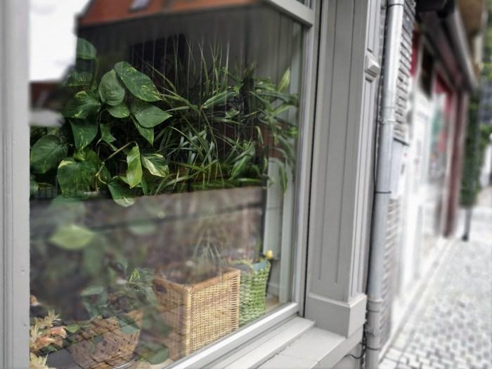 plantes verte découvrez toutes les solutions pour remplacer vos rideaux