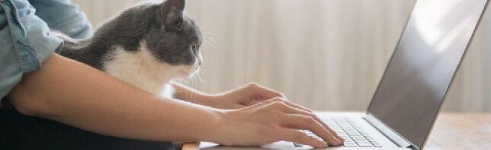 chat et télétravail