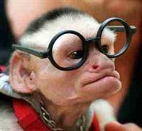 monkey-nerd.jpg
