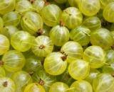 Gooseberry [गूसबेरी] – आँवला [Amla]