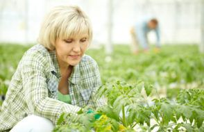 What are the Advantages of Gardening?