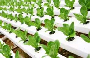 Hydroponics Information - Small Garden Design Ideas