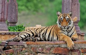 Ranthambore Online Safari Booking Tips