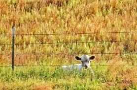 Fence Line Sitting