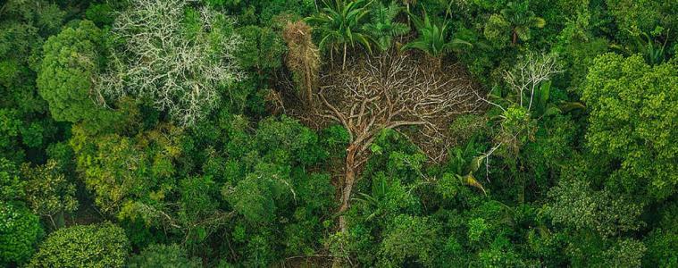 DENUNCIA – Greenpeace aciona o MPF/RO para combater ação de madeireiros na Terra Karipuna, 10 mil hectares destruídos